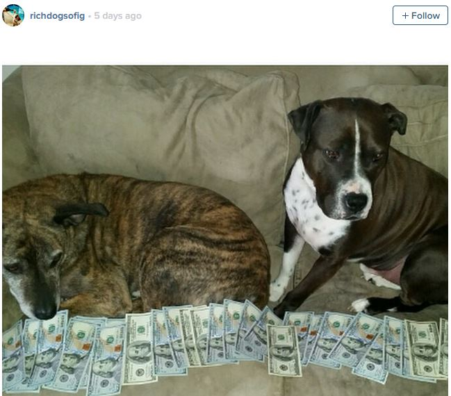 The Rich Dogs Of Instagram