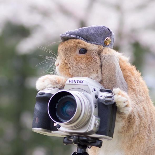 Most Popular Instagram Bunny