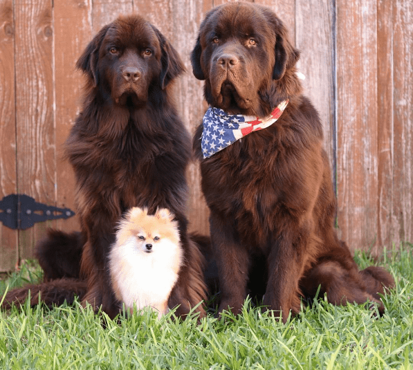Most Famous Instagram Dogs
