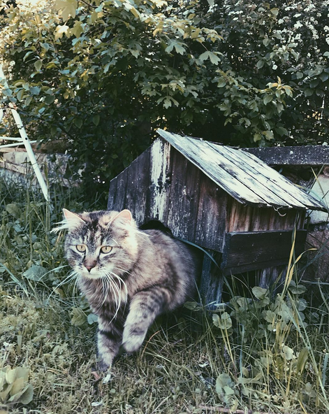 buy real instagram followers cat home