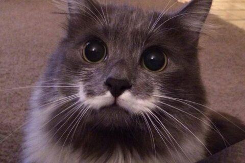 Buy Instagram Likes cat